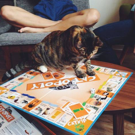 Just a casual catopoly-game with one of the fluffy hosts of the Cafe