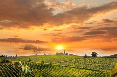 chianti-vineyard-landscape-tuscany
