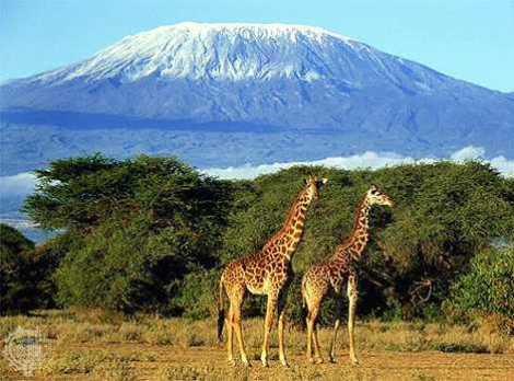 Mount Kilimanjaro, Tanzania, Africa