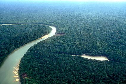 beasts-amazon-jungle-425x283