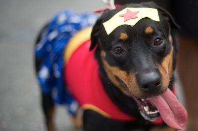 Wonderdog
