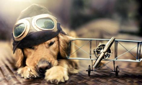 dog-photography-chuppy-golden-retriever-jessica-trinh-15