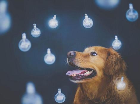 dog-photography-chuppy-golden-retriever-jessica-trinh-17