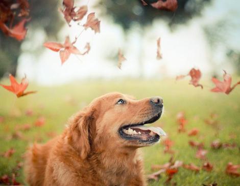 dog-photography-chuppy-golden-retriever-jessica-trinh-18