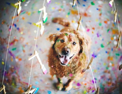dog-photography-chuppy-golden-retriever-jessica-trinh-19