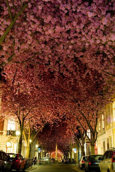 amazing-tree-tunnels-1 street bonn germany