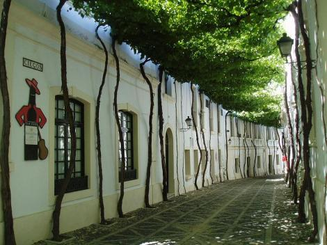 amazing-tree-tunnels-15 street in jerez spain