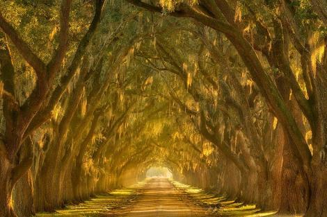 amazing-tree-tunnels-18 mississipi river new orleans lousiana