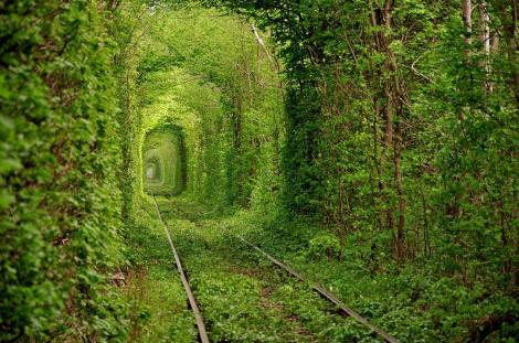 amazing-tree-tunnels-2-1 tunnel of love ucraina
