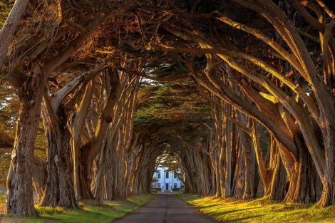 amazing-tree-tunnels-20 Cypress Tree Tunnel At The Historic Marconi Wireless Station, California