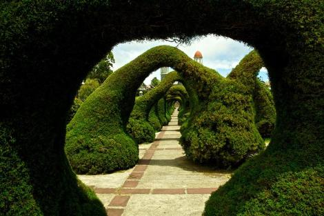 amazing-tree-tunnels-23 Parque Francisco Alvarado in Costa Rica
