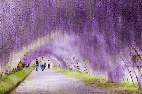 amazing-tree-tunnels-3-2 japan