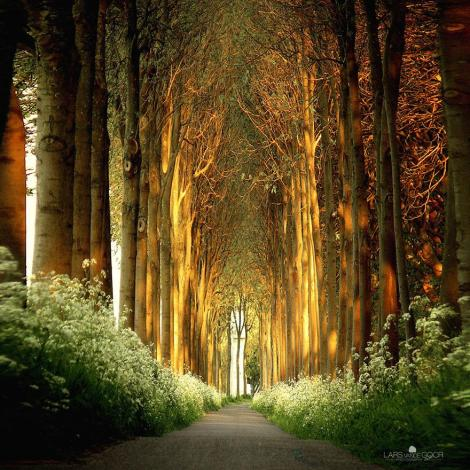 amazing-tree-tunnels-7 Tree Tunnel in Netherlands