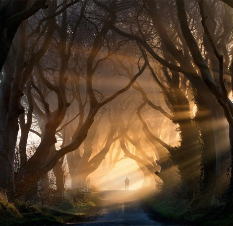 amazing-tree-tunnels-9-1 irlanda nord