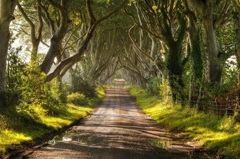 amazing-tree-tunnels-9-2 irlanda nord