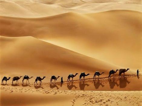 Arabian desert caravan