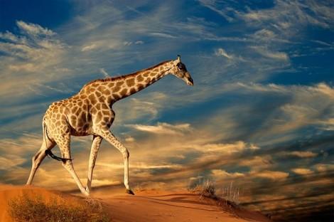 Kalahari Desert 2