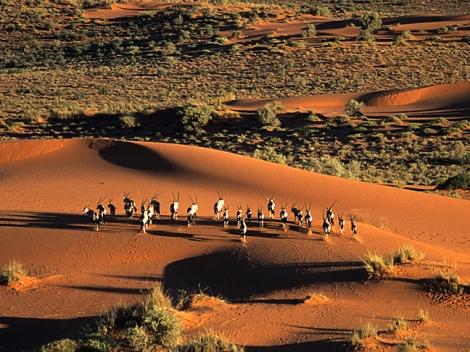 Kalahari Desert 3