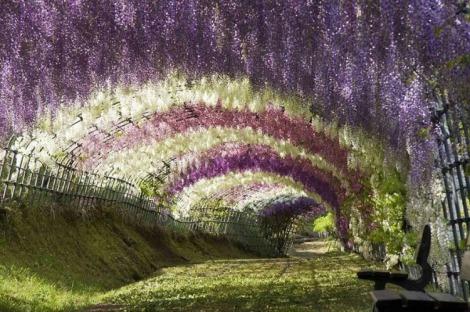 nature tunnels copertina
