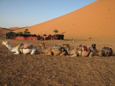 sahara desert 3
