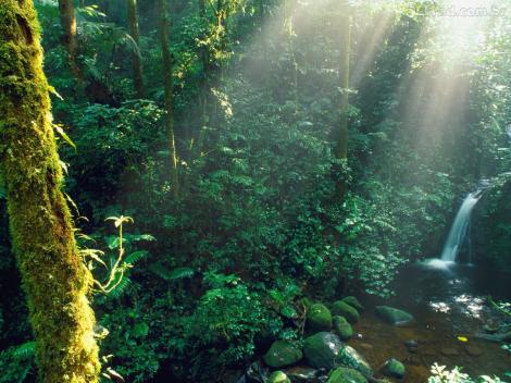 a foreste pluviali ultradownloads.com.br