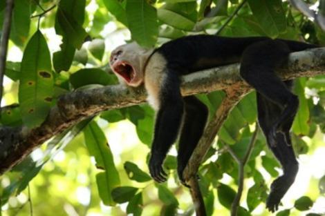 a ingrandire Central-America--Costa-Rica vacation-rental.com
