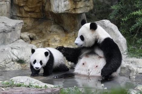 panda reserve 1b