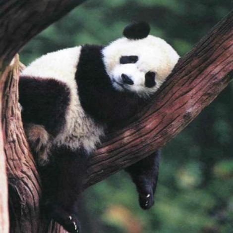 panda reserve 5 x fb