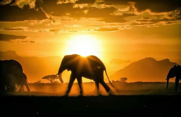 africa elefanti