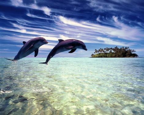 - Dolphins-delfini-10346657-1280-1024