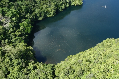 Jellyfish_Lake_aerial,_focus_on_jellyfish