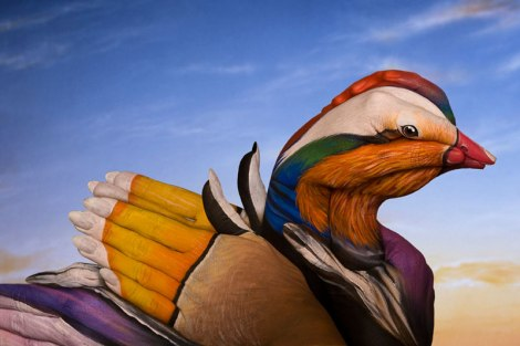 mandarin-duck