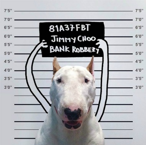 rafael-mantesso-bull-terrier-3