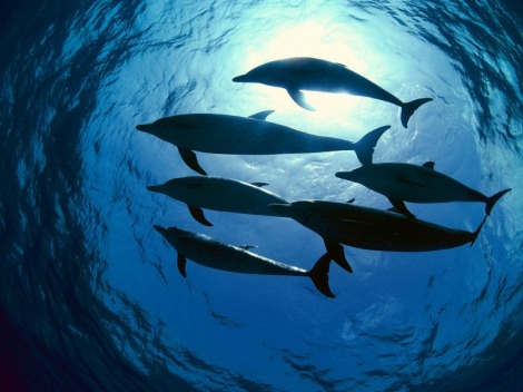 swimming_with_dolphins_underwater